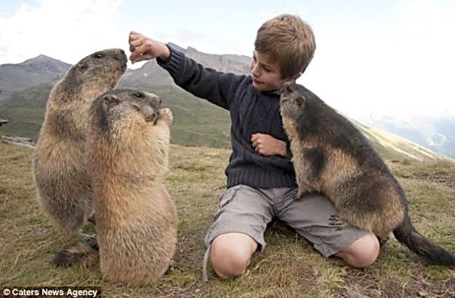 sulla consapevolezza del respiro Marmotta4
